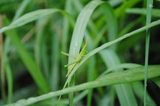 雨上がりの茂みの中には昆虫も隠れている
