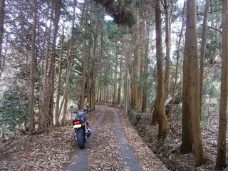 野呂山の山頂の山道