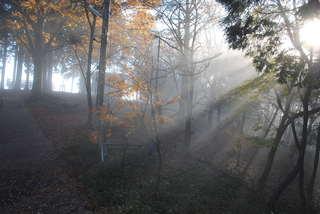 朝日の差し込む霧の海展望台