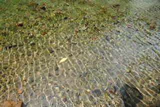 池の底が見渡せる弁天池