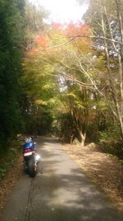 野呂山の紅葉
