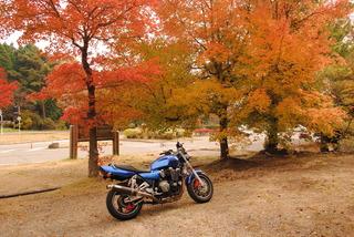 野呂山の紅葉をホワイトバランスを変えて撮影