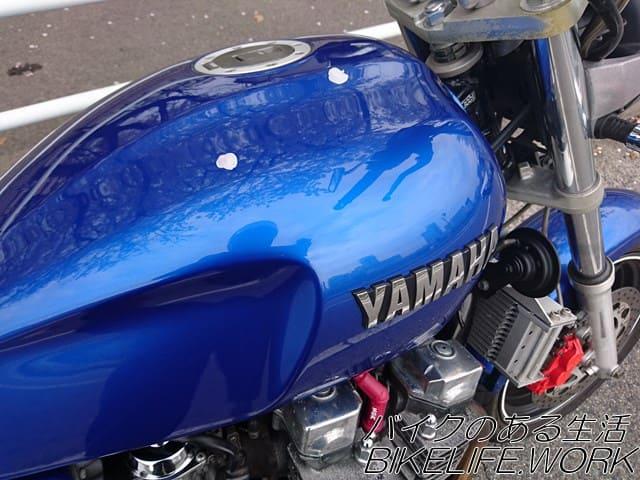 バイクのタンクに落ちた桜の花びら