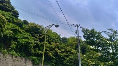 蝶の形をした街灯