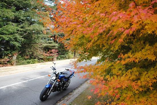彩度を変える前の紅葉の写真