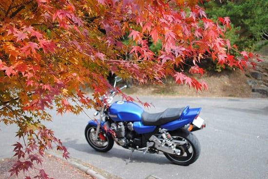 一眼レフで撮影した紅葉の写真