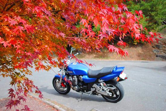 彩度を上げた紅葉の写真