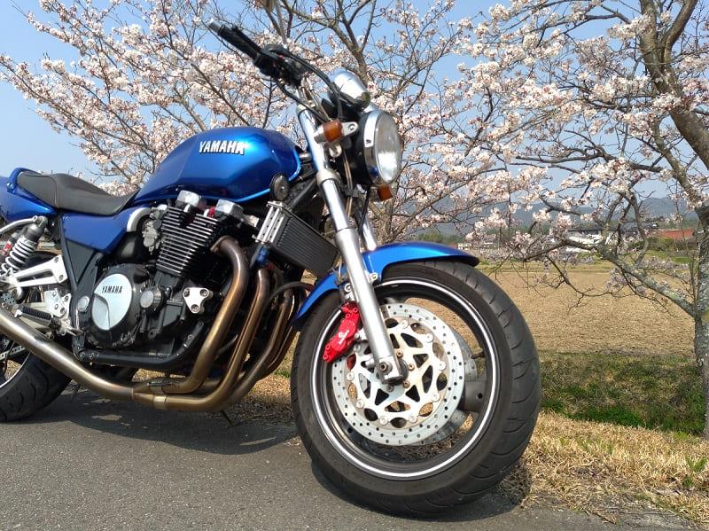 桜の前で撮影したバイク