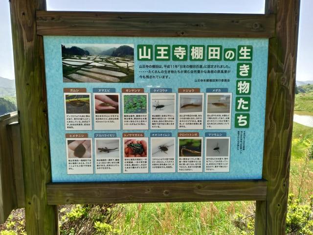 棚田に住む生き物の紹介
