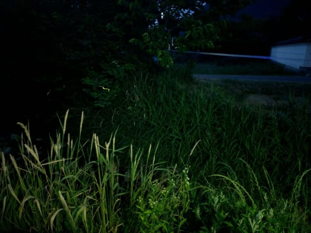 ホタルが飛ぶ草むら