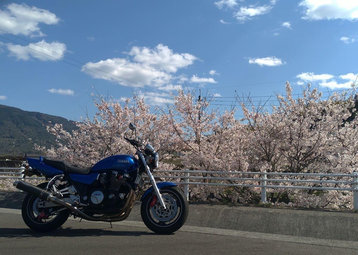 桜とバイク