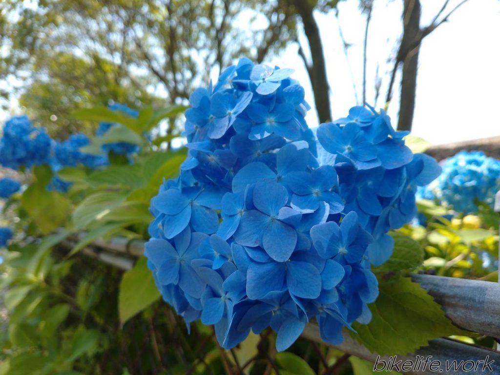 綺麗な花も被写体として面白い
